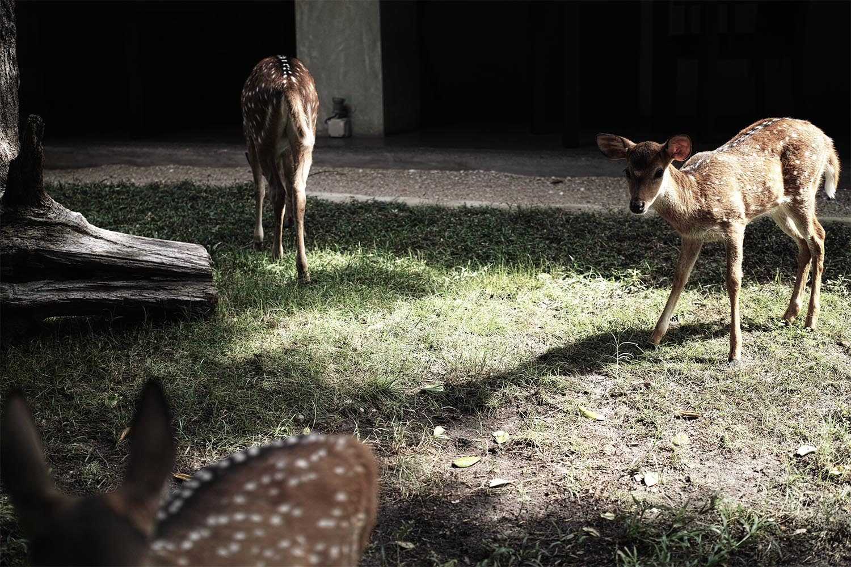 deer_thevoyageur02