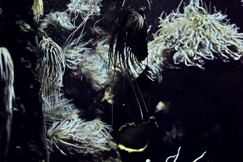 rhodes_aquarium_thevoyageur02