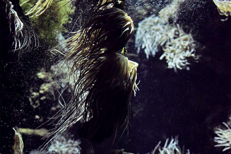 rhodes_aquarium_thevoyageur03