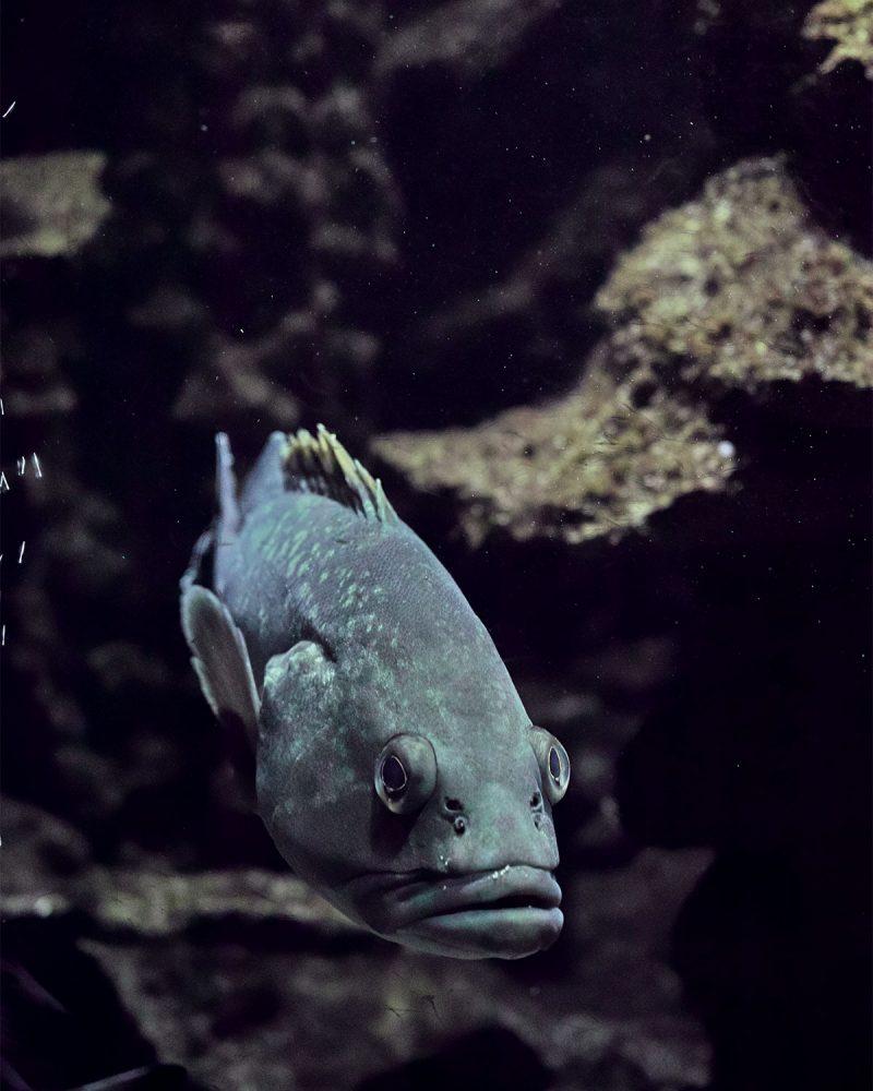 rhodes_aquarium_thevoyageur04