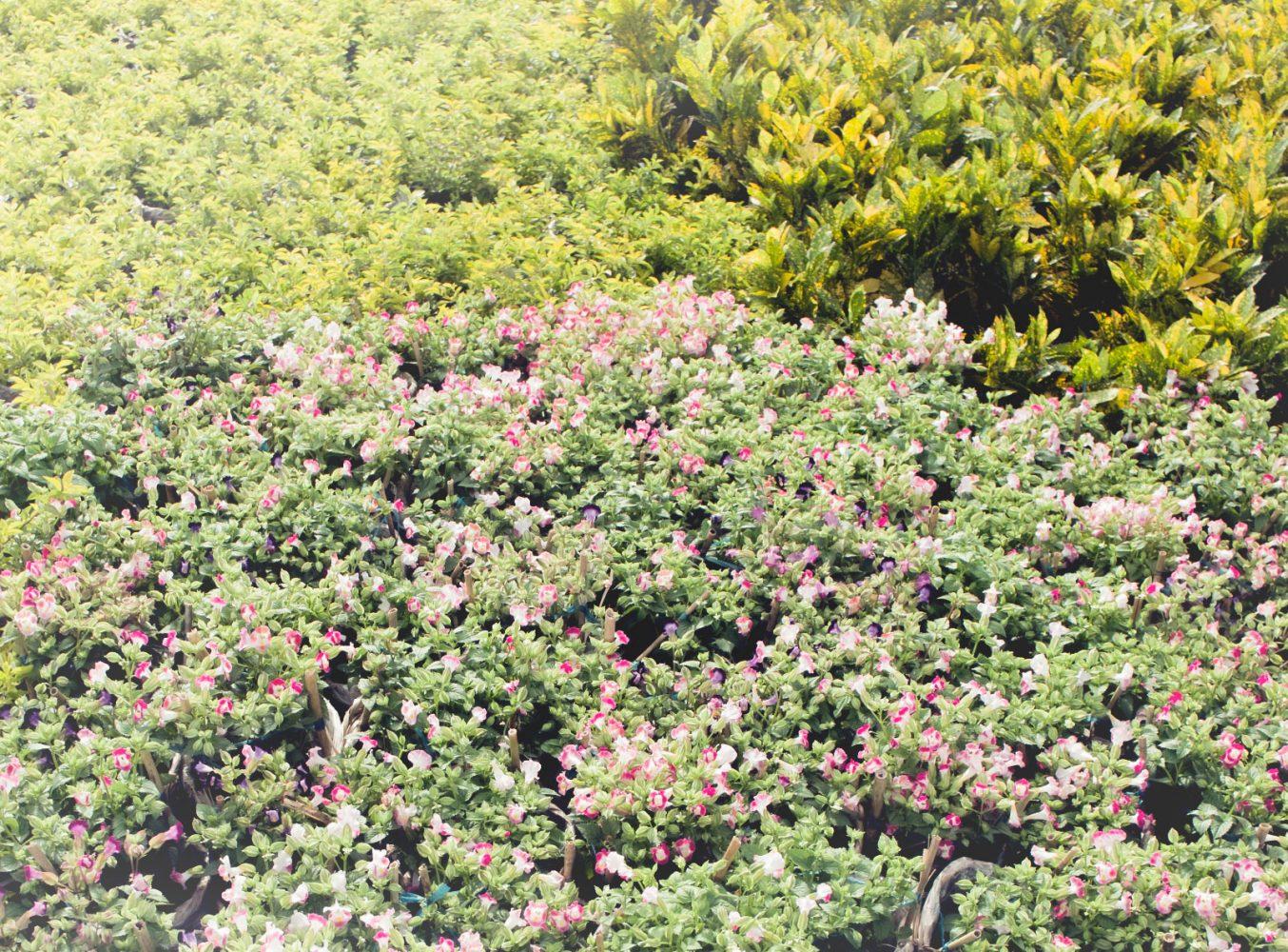 garden_mekong_thevoyageur11