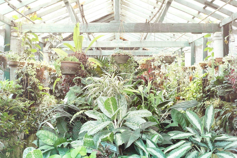 kandy_botanicalgarden_srilanka_thevoyageur_01