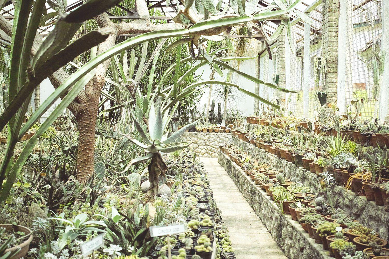 kandy_botanicalgarden_srilanka_thevoyageur_04