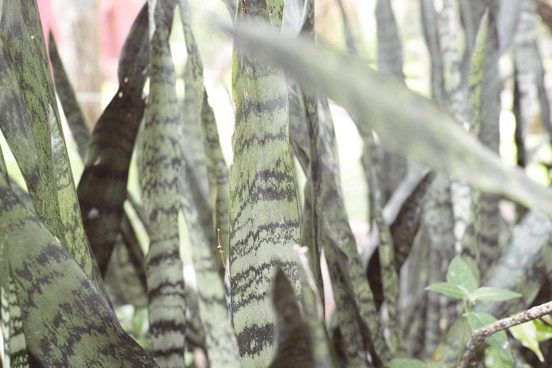 kandy_botanicalgarden_srilanka_thevoyageur_05