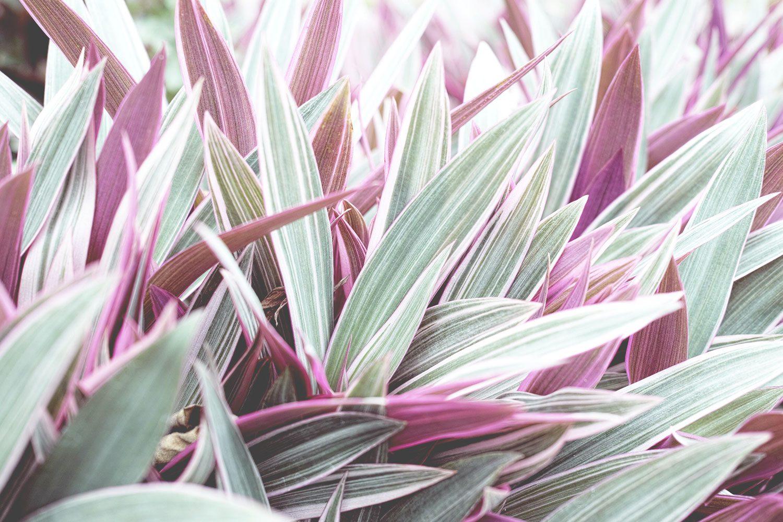 kandy_botanicalgarden_srilanka_thevoyageur_07