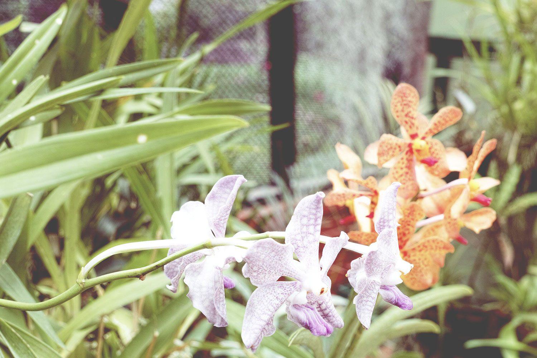 kandy_botanicalgarden_srilanka_thevoyageur_08