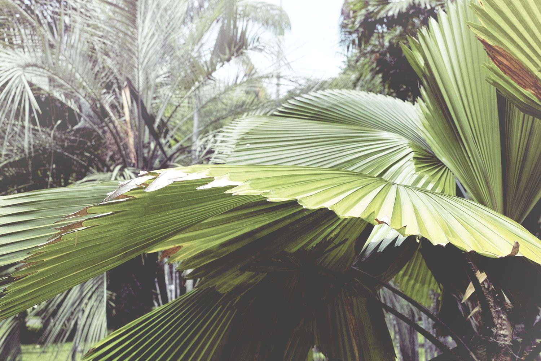 kandy_botanicalgarden_srilanka_thevoyageur_09