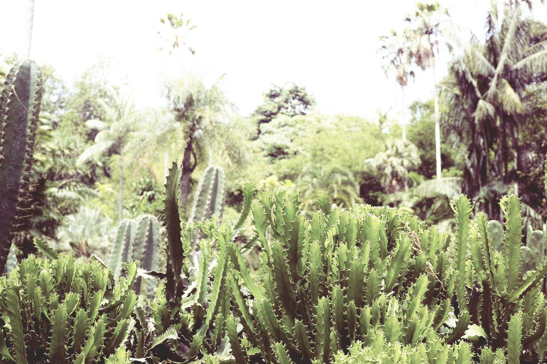 kandy_botanicalgarden_srilanka_thevoyageur_10