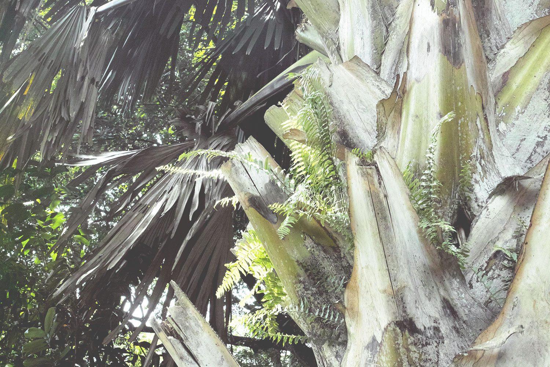 kandy_botanicalgarden_srilanka_thevoyageur_11