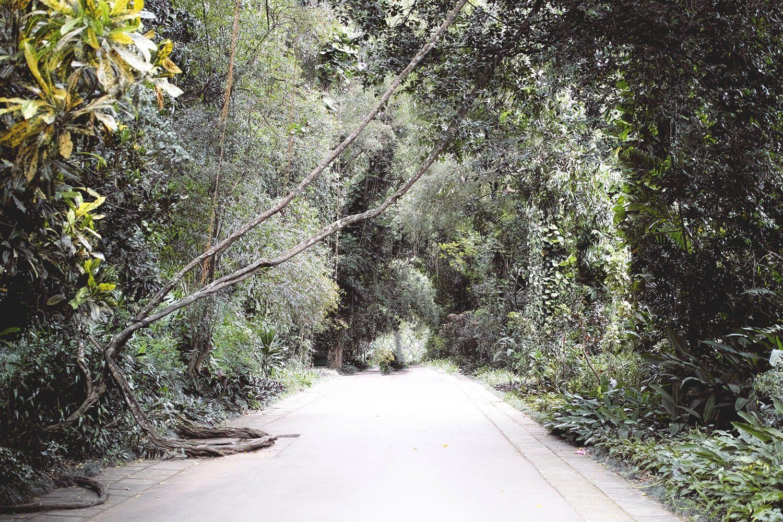 kandy_botanicalgarden_srilanka_thevoyageur_12