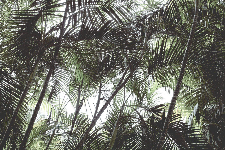 kandy_botanicalgarden_srilanka_thevoyageur_14