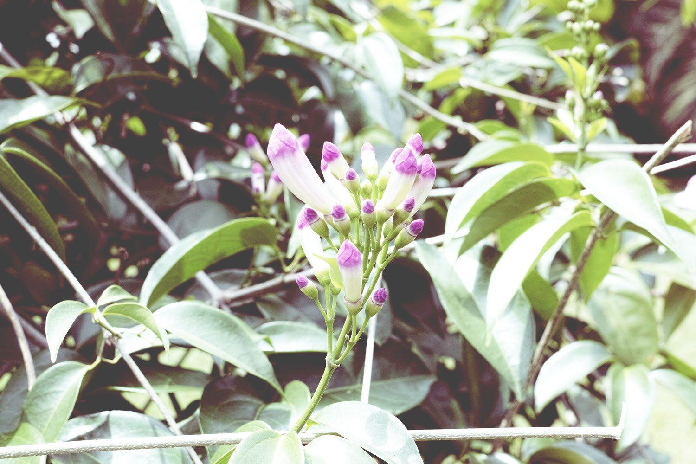 kandy_botanicalgarden_srilanka_thevoyageur_15