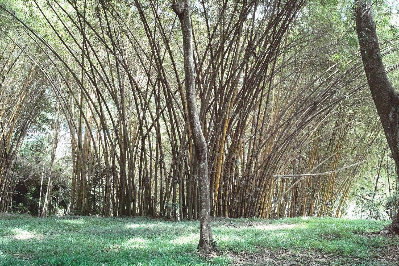 kandy_botanicalgarden_srilanka_thevoyageur_16