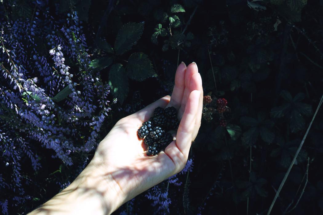 blackberries_castets_france_thevoyageur