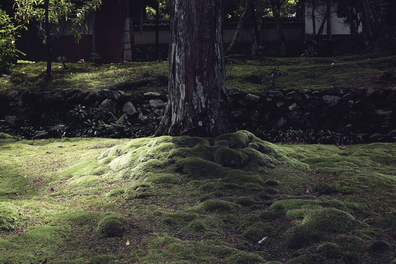 moss_temple_kokadera_japan_thevoyageur02