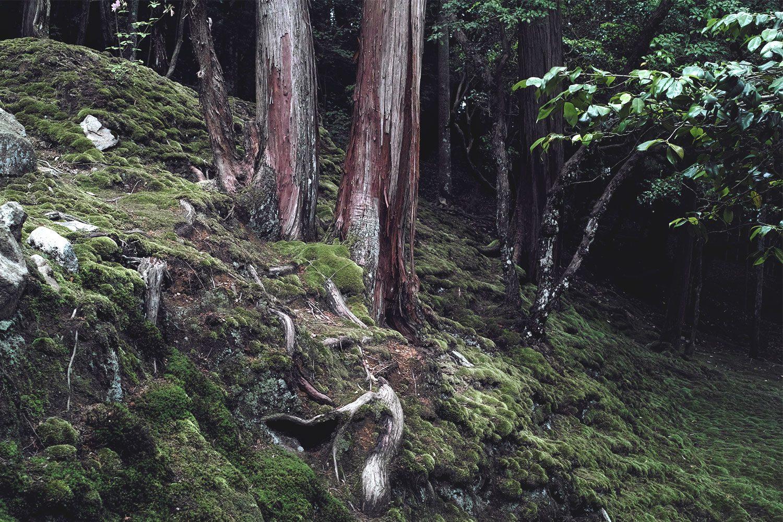 moss_temple_kokadera_japan_thevoyageur09