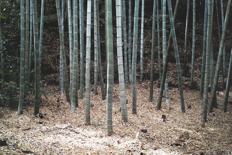 moss_temple_kokadera_japan_thevoyageur10
