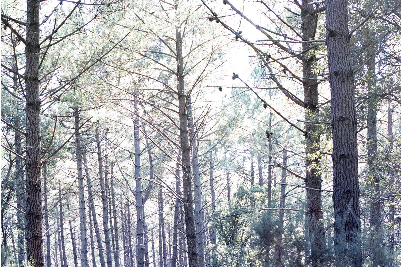 panorama_landesforest_thevoyageur009
