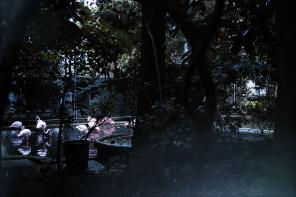 The scene : Flamingos on Via Cappuccini, Milan, Italy