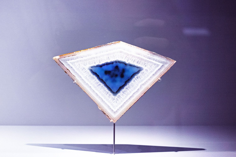 museumhistoirenaturelle_paris_thevoyageur016