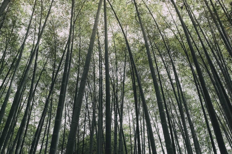 jizoin_bamboo_temple_kyoto_japan_thevoyageur005