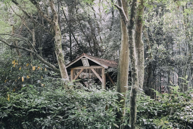 jizoin_bamboo_temple_kyoto_japan_thevoyageur014