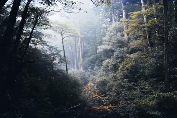 Yakusugi_land_yakushima_japan_thevoyageur (1 sur 1)