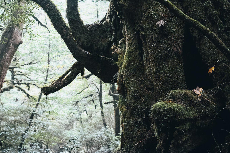 yakusugiland_yakushima_japan_thevoyageur18