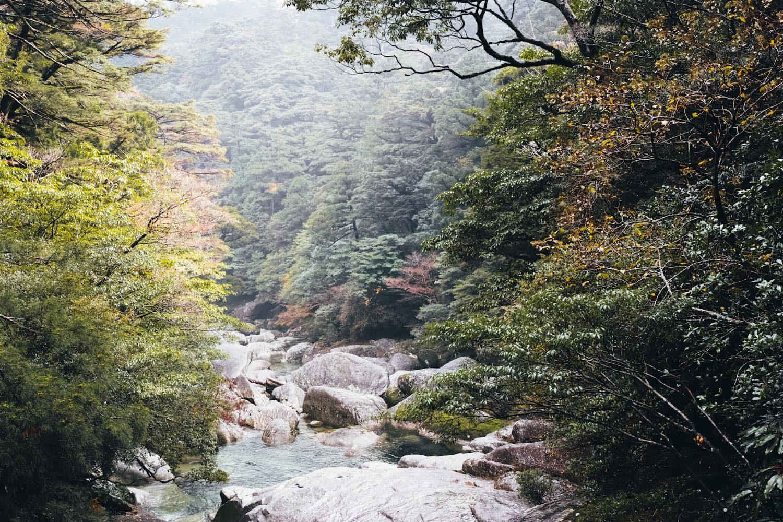 yakusugiland_yakushima_japan_thevoyageur33