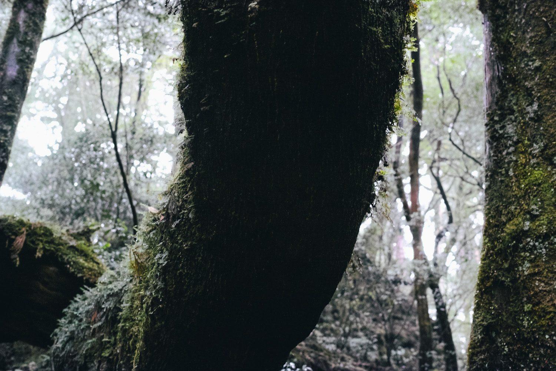 yakusugiland_yakushima_japan_thevoyageur34