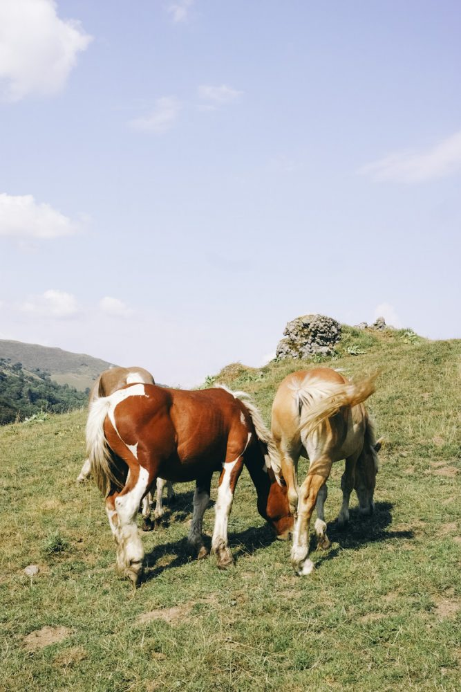 horses_cantal_france_thevoyageur001
