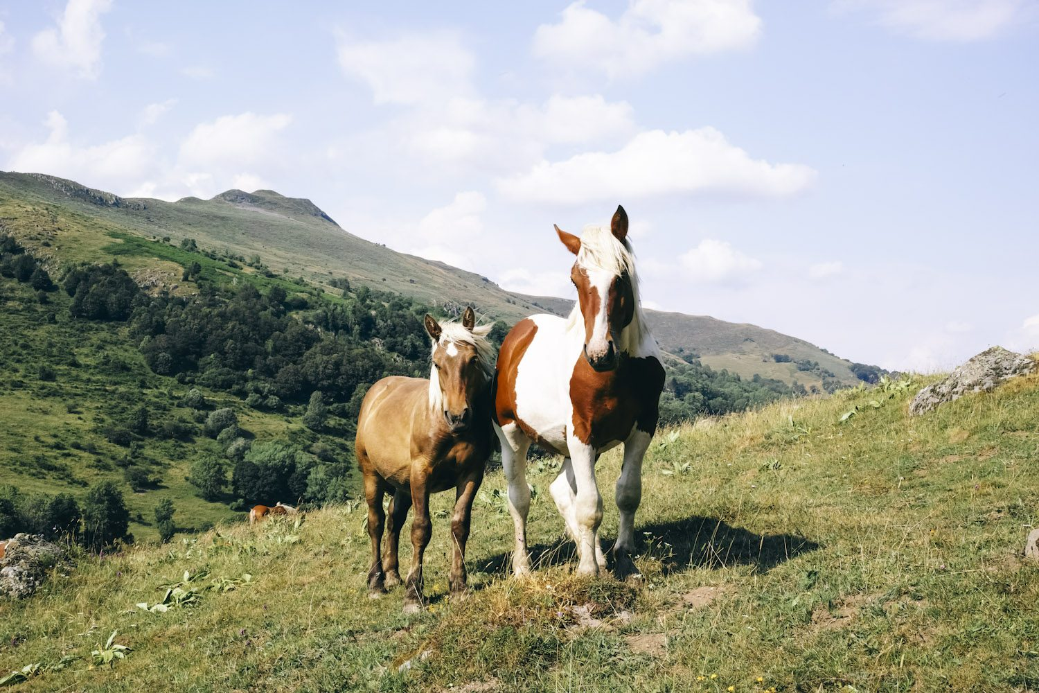 horses_cantal_france_thevoyageur002