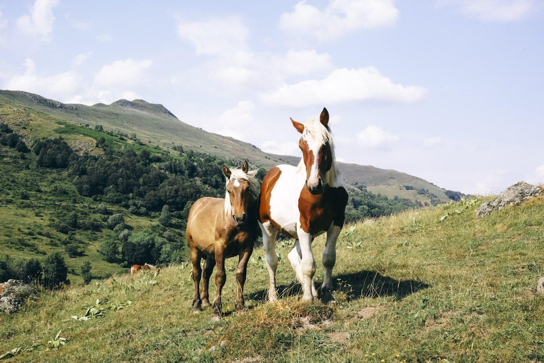 horses_cantal_france_thevoyageur002