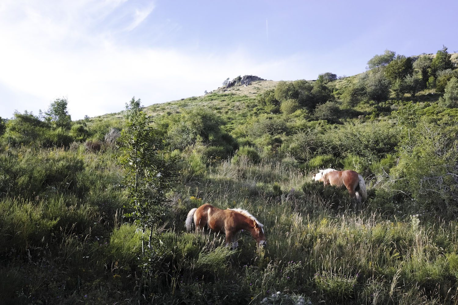 horses_cantal_france_thevoyageur004