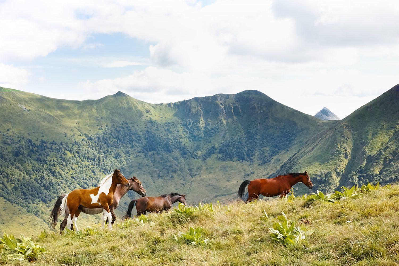 horses_cantal_france_thevoyageur007