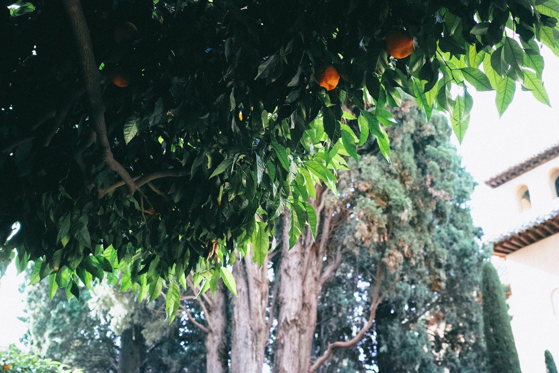 greendelight_alhambra_granada_spain (2)