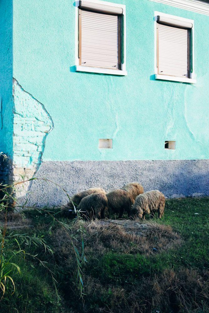 themood_sighisoara_county_transylvania_romania_thevoyageur028